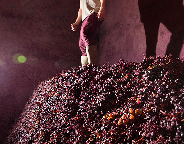 Elaboración tradicional para vinos únicos de Rioja