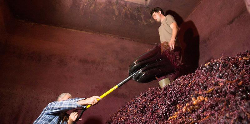 Método tradicional del pisado de la uva para elaborar vino de Rioja