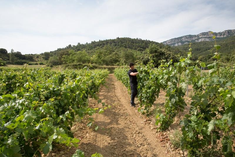 Israel en plena faena cuidando de sus viñedos con la Sierra de Cantabria al fondo