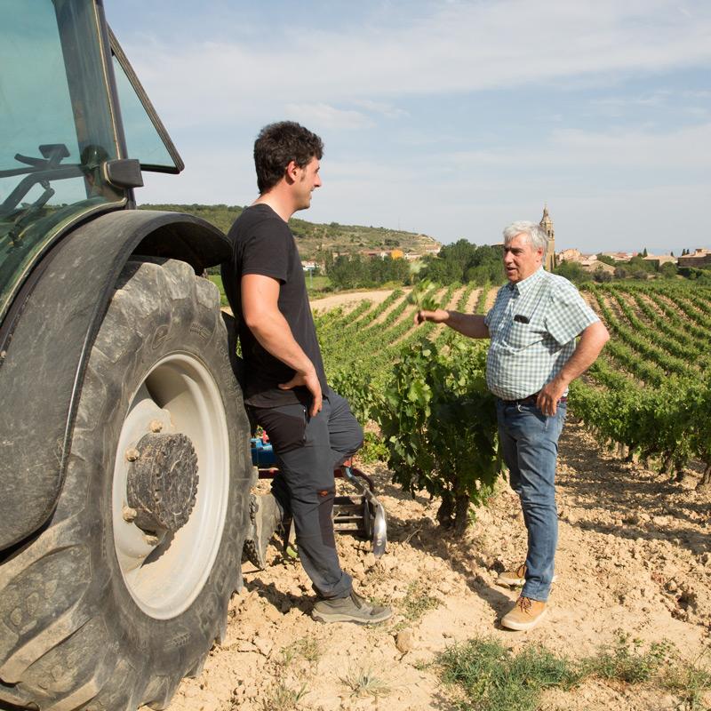 Momento de labranza de los viñedos de Bodegas Eguíluz
