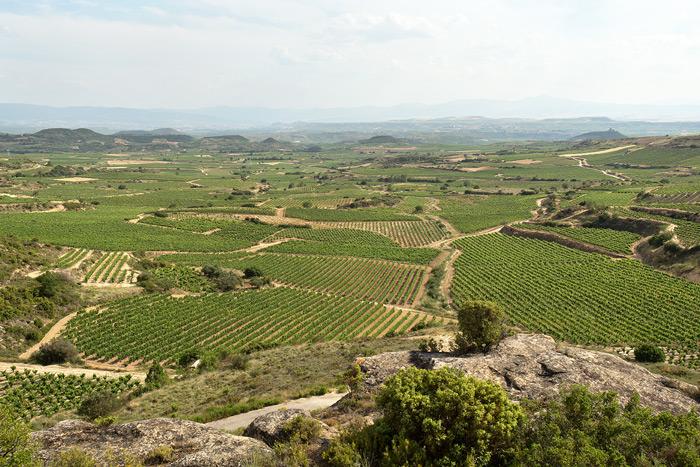 Panorámica de los Viñedos de Bodegas Eguíluz