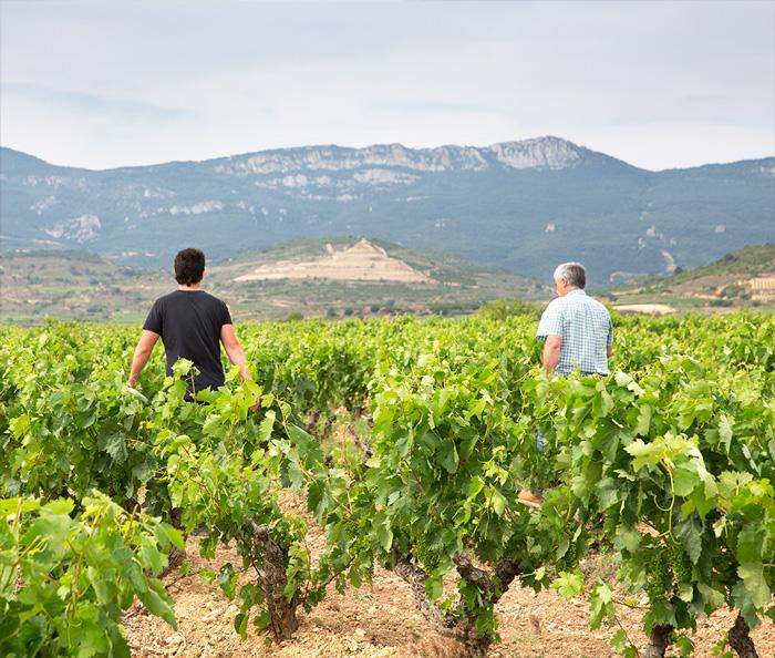 Javier e Israel caminan entres los viñedos de Bodegas Eguíluz con la sierra de Cantabria al fondo